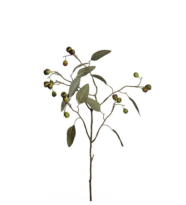 Herlig Mr Plant Kvist Eucalytus H:65 - Lunehjem.no - interiør på nett OW-08