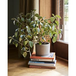 507992_Rel Plant Pot With Saucer L grey.jpg
